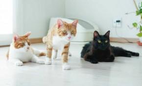 日本兽医发明智能猫厕所 支持猫脸识别并记录健康数据