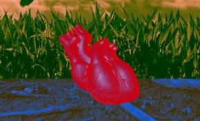 德国科学家研发人造心脏:跟真实一样能跳动